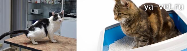 болезни кошек симптомы и лечение