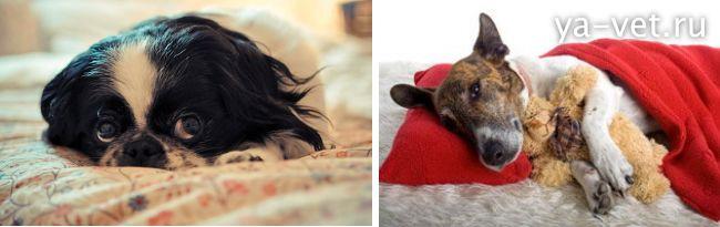 болезни собак и их признаки