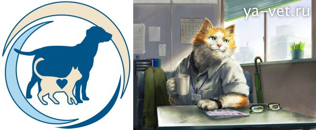 цистит у кошек симптомы лечение