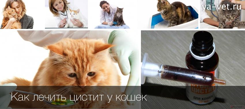 Как лечить запоры у котов в домашних условиях