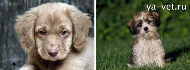 цистит у собаки симптомы