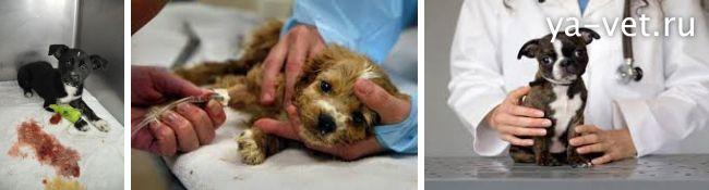 энтерит у собаки симптомы и лечение