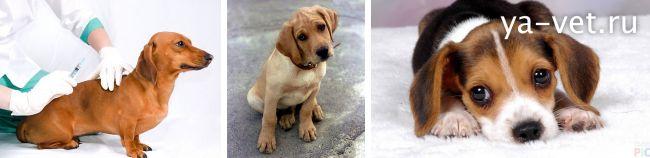 какие прививки нужно делать щенку