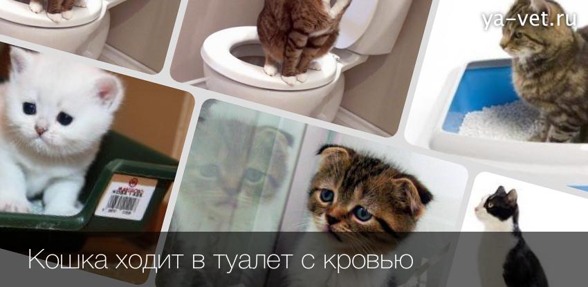 Почему ходишь с кровью в туалет по большому
