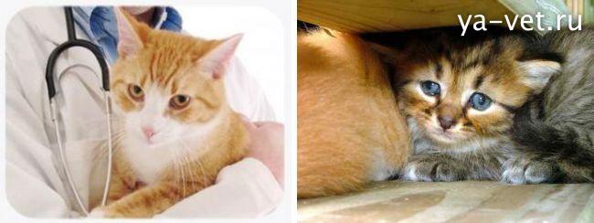 кровь в кале у кошки