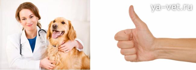 почему собака кашляет