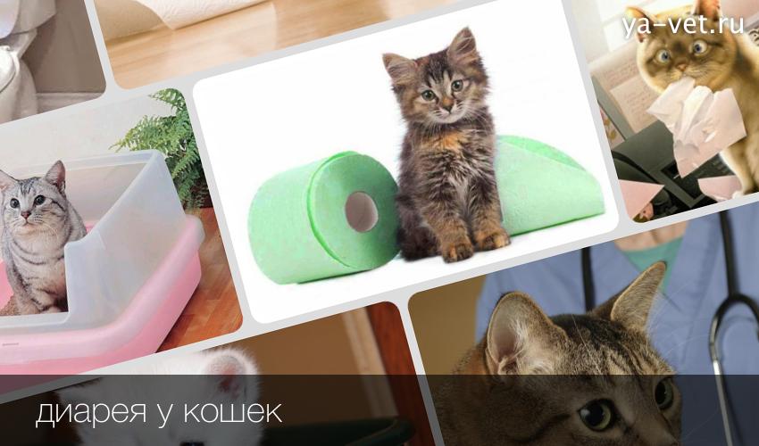 Из за чего понос у котят в домашних условиях