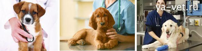 понос у собаки чем лечить