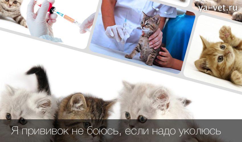 Прививки для кошек — сроки и основные правила вакцинации