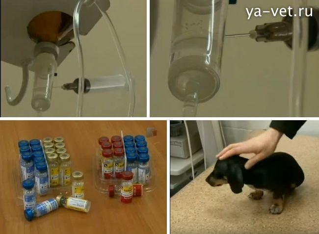 прививки для собак цена