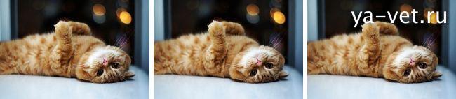рвота у кота причины и лечение