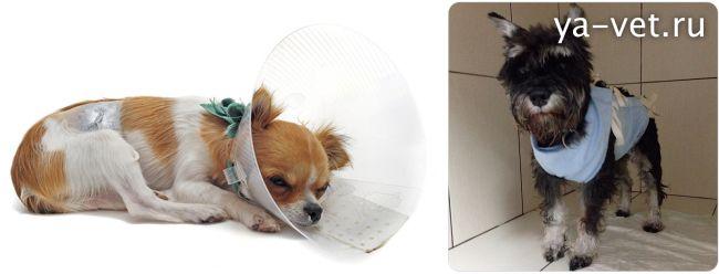 сколько стоит стерилизация собаки