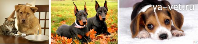 судороги у собаки