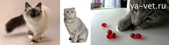 у кошки понос что делать