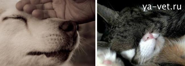 усыпление животных