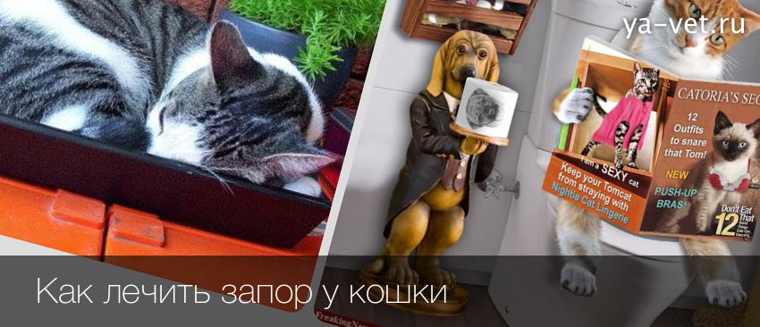 Лечение запора у кота в домашних условиях
