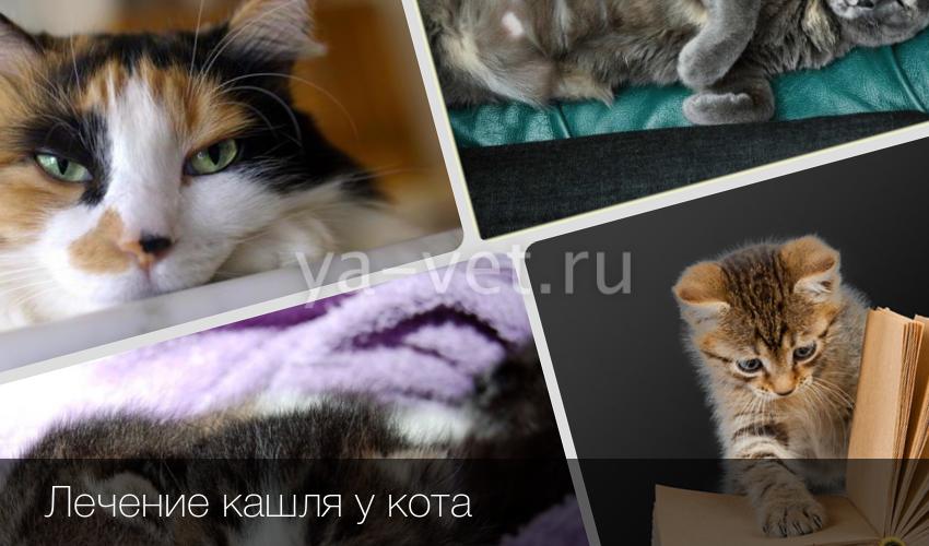 Если кот кашляет чем лечить в домашних