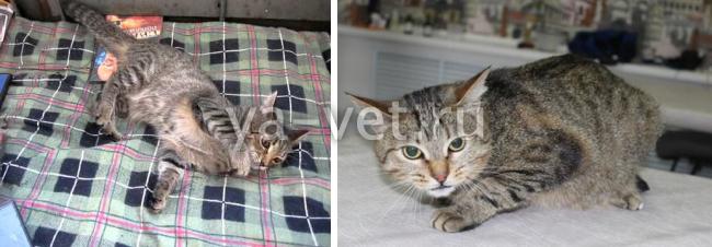 Эпилепсия у кошки симптомы и лечение в домашних условиях 400
