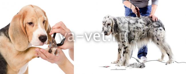 груминг собак цены
