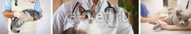 иммунодефицит у кошек