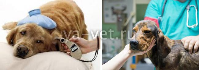 инсульт у собаки симптомы лечение