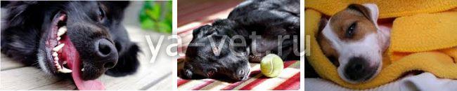 инсульт у собаки симптомы