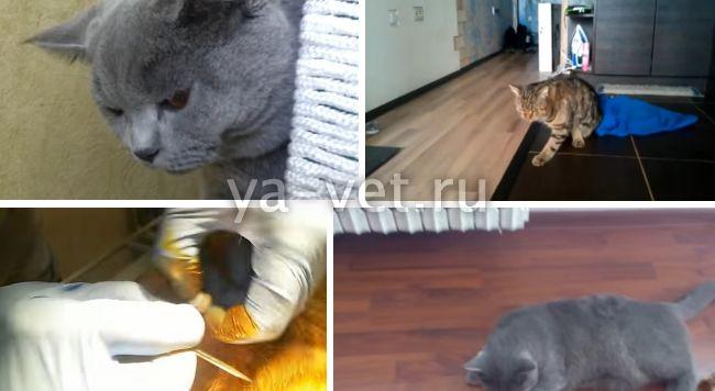 кастрация котов возраст и последствия