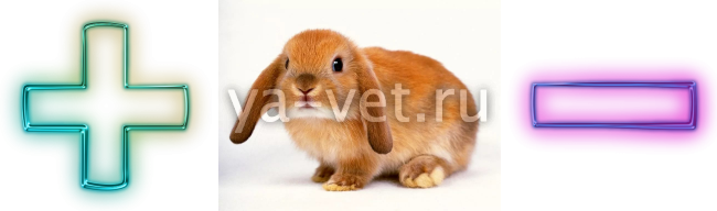 кастрация кроликов перевязыванием