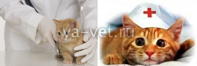 когда делать первую прививку котенку