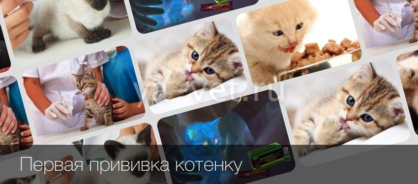 Какие прививки делают котятам и когда нужно делать первую прививку