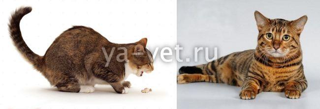 кот кашляет и хрипит причины