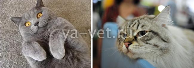 Что бывает с котами после кастрации