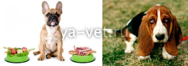 панкреатит у собак лечение