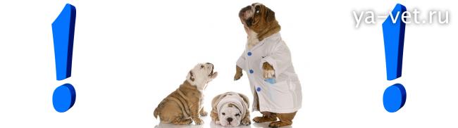 пироплазмоз у собак симптомы
