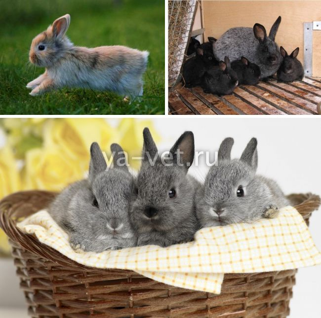понос у кролика что делать