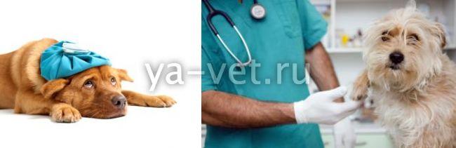 повышение щелочной фосфатазы у собак