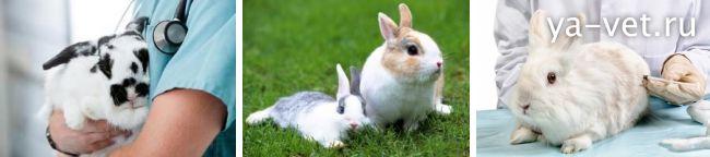 прививки кроликам какие и когда делать