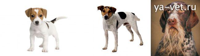 прививки собакам по возрасту таблица