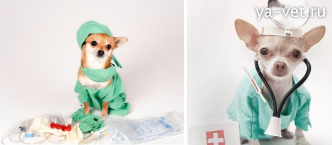 прививки собакам по возрасту
