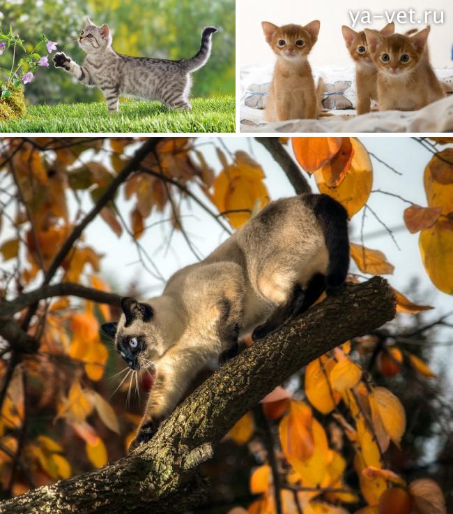 признаки токсоплазмоза у кошек