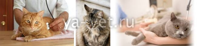 рак у кошек симптомы