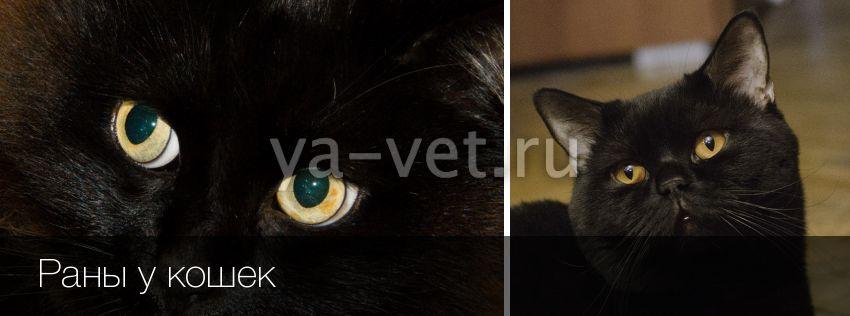 Чем лечить глубокую рану у кота