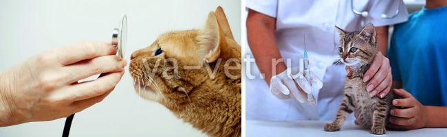 вакцинация кошек график прививок