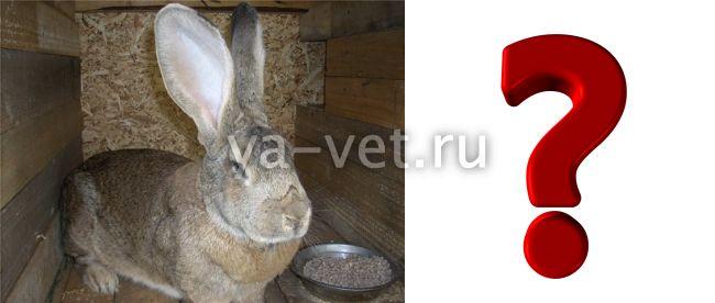 вздутие живота у кроликов причина и лечение