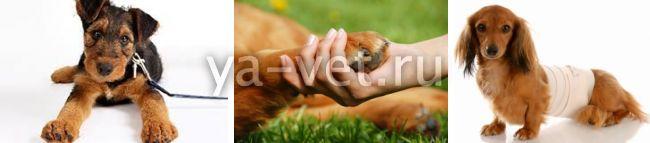 артрит у собаки лечение