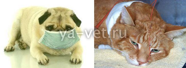 дерматолог ветеринар в москве