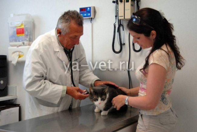 энтерит у кошек лечение