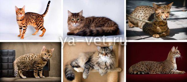 энтерит у кошек