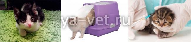 гемобартонеллез у кошки можно ли вылечить