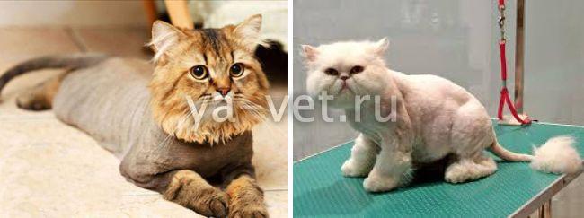 груминг кошек цена